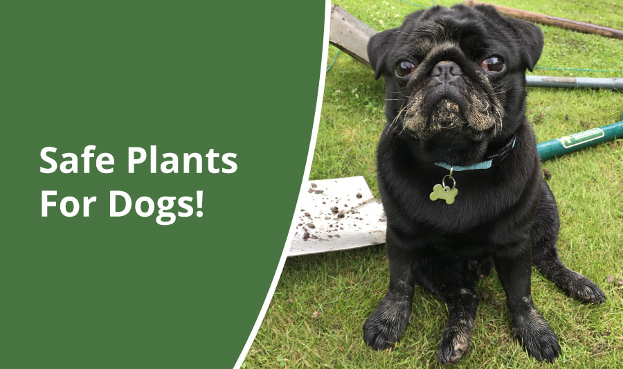 Safe Plants for Gardens with Dogs